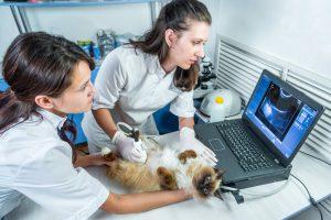Ветеринар гинеколог
