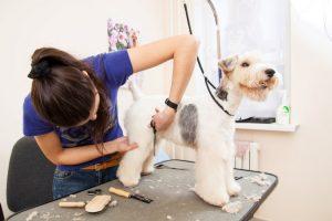 Ветеринар парикмахер
