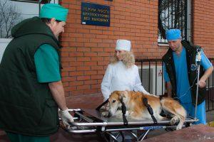 Выезд ветеринара